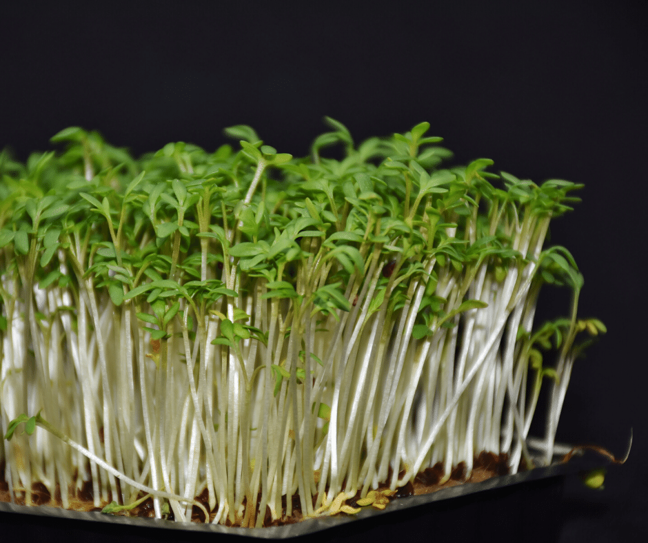 GROWING AND SERVING THE FRESHEST MICROGREENS WHILE ALSO SAVING MONEY